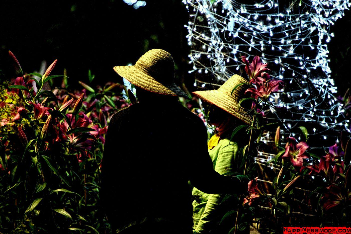 Cudny festiwal kwiatów w tajskim Chiang Rai.